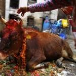 Gai Puja (Tihar Festival)