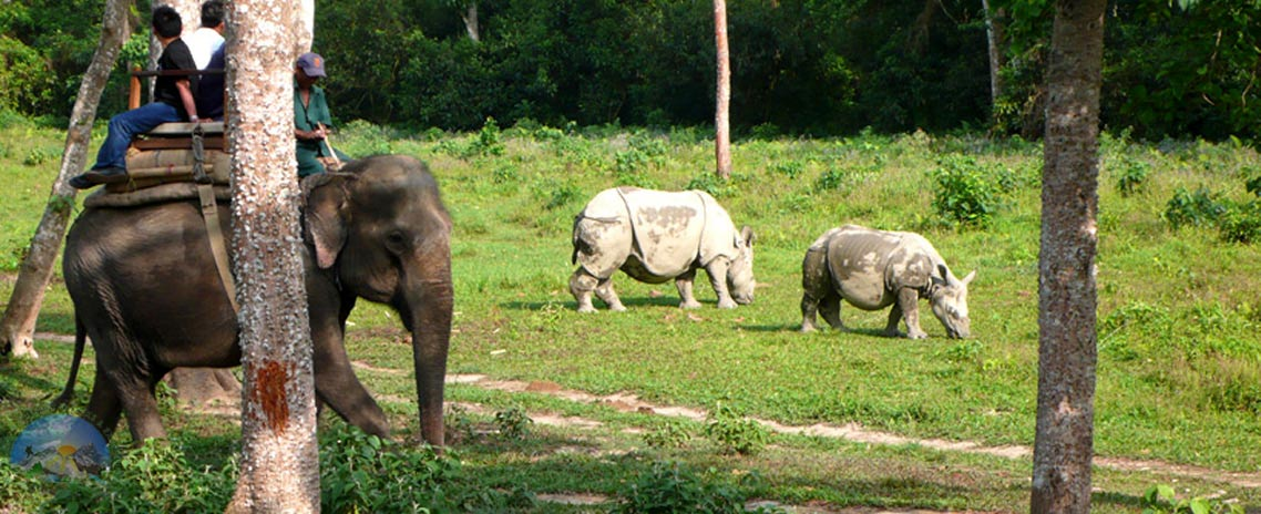 Wildlife Tour in Chitwan