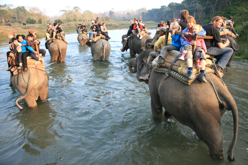 Elephant Safari in Chitwan National Park
