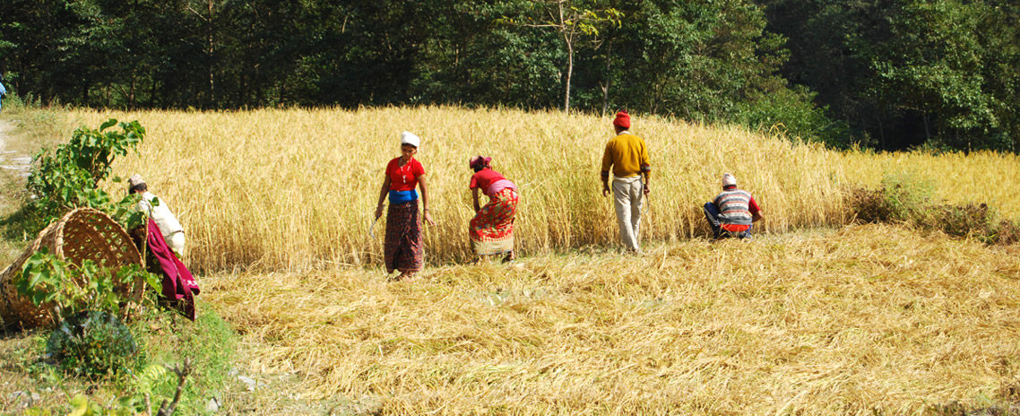 Agro Tour in Nepal