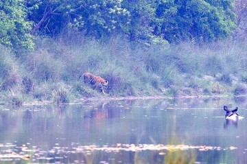 Bardiya National Park Tour : (2 Nights 3 Days) - PLAN A