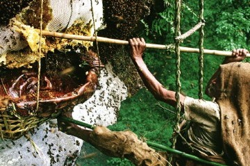 Honey Hunting Trip in Nepal