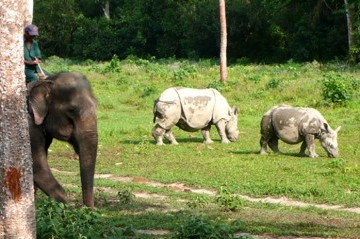 Nepal Wildlife and Culture Tour Package